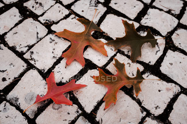 Dry orange oak autumn leaves on light pavement — Stock Photo