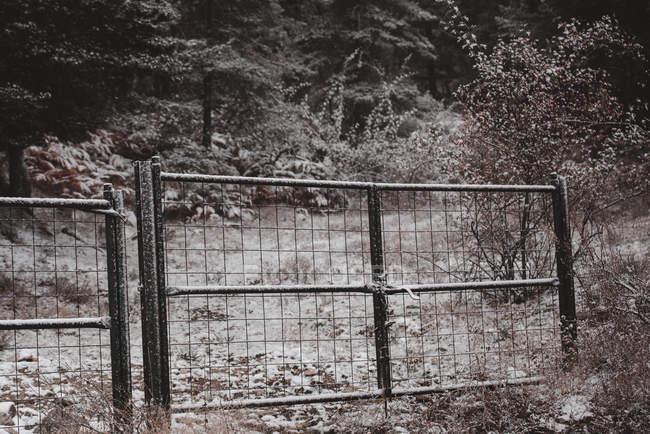 Ворота иней в лесах, покрытых снегом в Португалии — стоковое фото