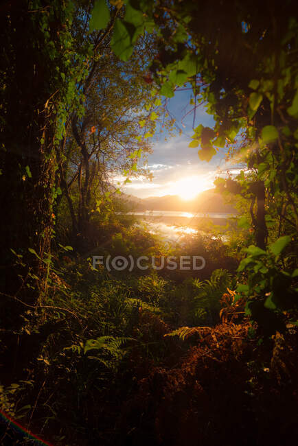 Picturesque view of majestic green plants growing near river during fantastic sunset in Spain — Stock Photo