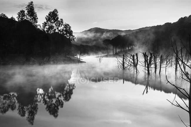 Чудова таємнича річка з деревами в тумані. — стокове фото