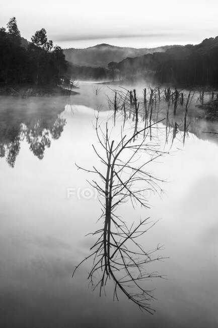 Hermoso río misterioso con árboles en la niebla - foto de stock
