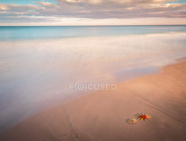 Starfish on sandy coast near sea — Stock Photo