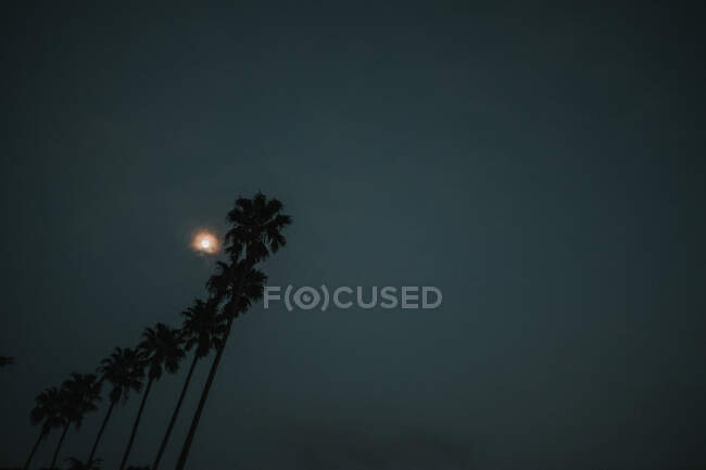 Bright moon shining on dark gray sky over silhouettes of palms in amazing evening in Porto, Portugal — Stock Photo