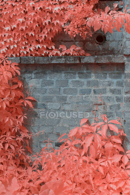 Bright infrared trees growing near lovely houses on quiet suburban street in Linz, Austria — Stock Photo