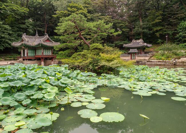 Спокойный пруд с прекрасными водяными лилиями возле маленьких корейских пагод в величественном парке — стоковое фото