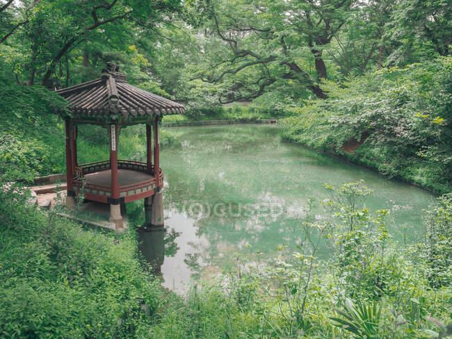 Пруд с водяными лилиями в удивительном парке — стоковое фото