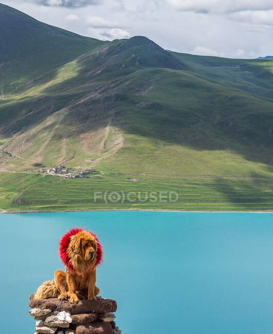 Cute big dog in red wreath sitting on stack of stones near calm lake and green hill on cloudy day in Tibet — Stock Photo