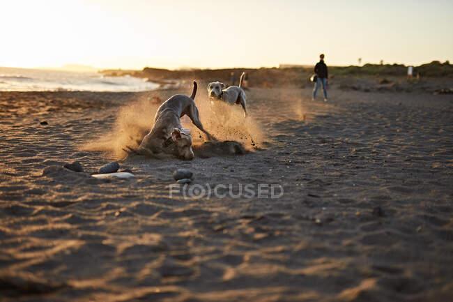 Lustiger Hund am Strand — Stockfoto