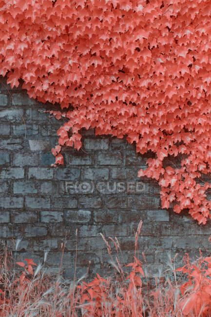 Яркие инфракрасные деревья растут возле каменного забора — стоковое фото