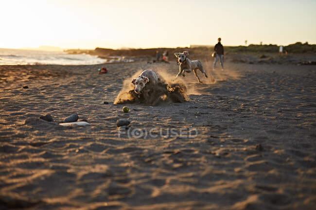 Chien drôle sur la plage — Photo de stock
