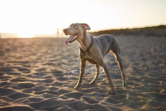 Funny dog on beach — Stock Photo