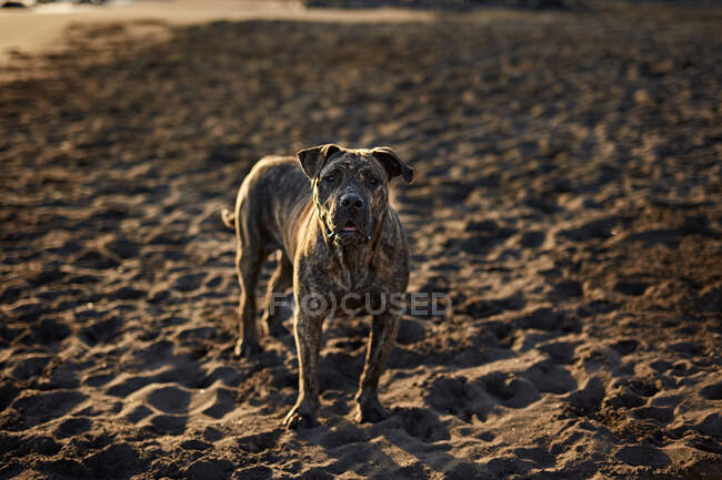 Funny dog on beach — Stock Photo