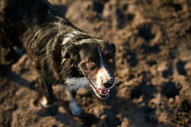 Lustiger Hund sitzt am Strand — Stockfoto