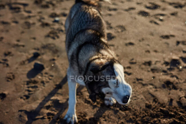Funny dog sitting on beach — Stock Photo