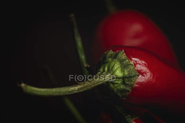 Primer plano de los chiles picantes rojos frescos sobre fondo negro - foto de stock