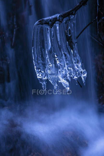 Primer plano de ramita con frágiles carámbanos limpios sobre fondo de asombrosa cascada en frío día de invierno - foto de stock