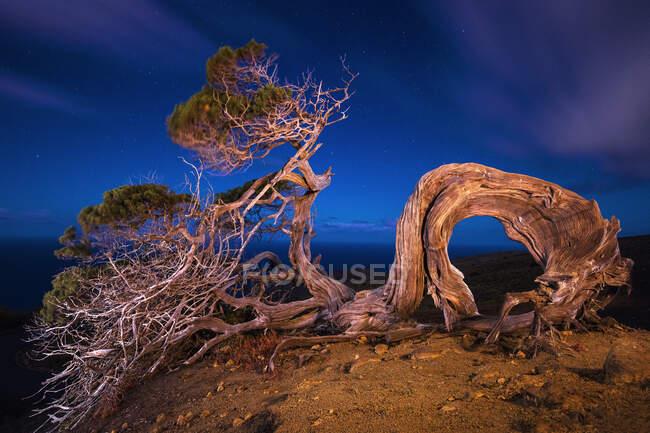 Ввечері на острові Гієрро (Канарський острів, Іспанія) на вершині пагорба і синьому небі росте чудове дерево. — стокове фото