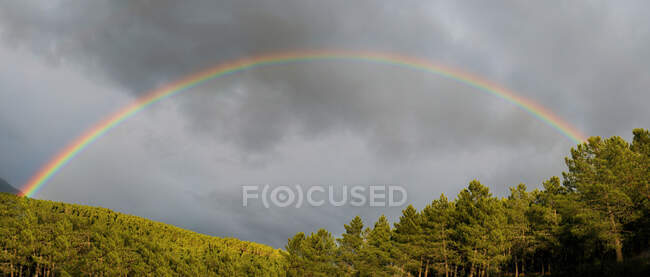 Bright rainbow shining on gray overcast sky near green forest in countryside — Stock Photo