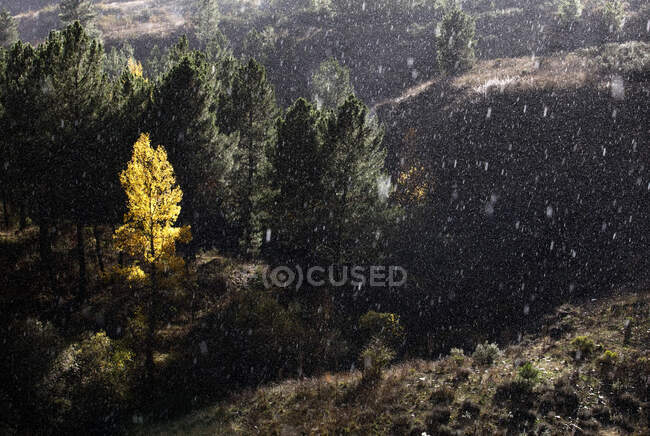 Trees growing near wonderful mountain range in a snowy day — Stock Photo