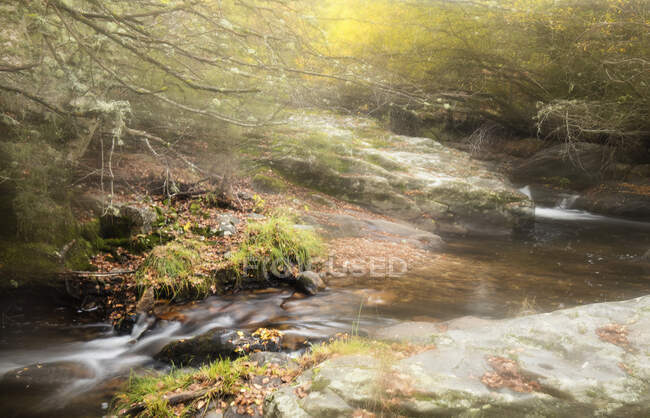 Wonderful brook with clear fresh water flowing in majestic autumn forest — Stock Photo
