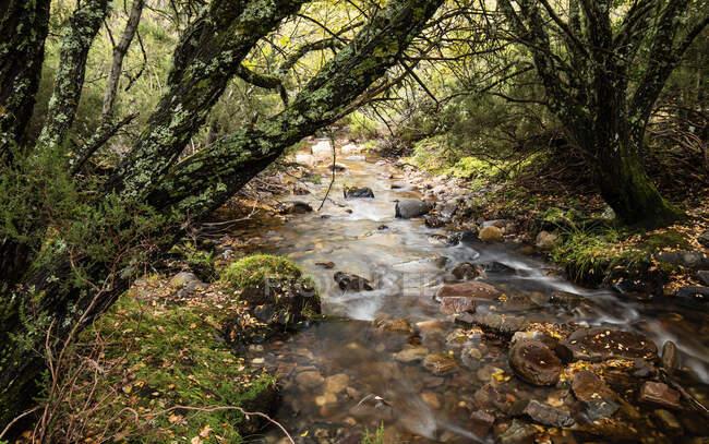 Maravilloso arroyo con agua dulce que fluye en majestuoso bosque otoñal - foto de stock