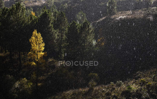 Trees growing near wonderful mountain range lightning by a ray of sun — Stock Photo