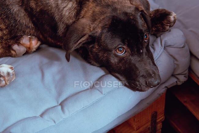 Perro acostado en el suelo - foto de stock