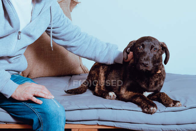 Faceless man sitting on bed with charming dog giving tender stroke — Stock Photo