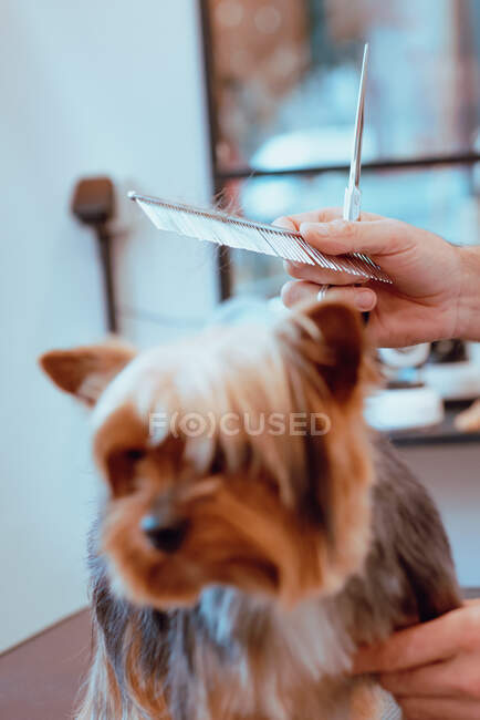 Grop groomer taglio pelliccia di cagnolino — Foto stock