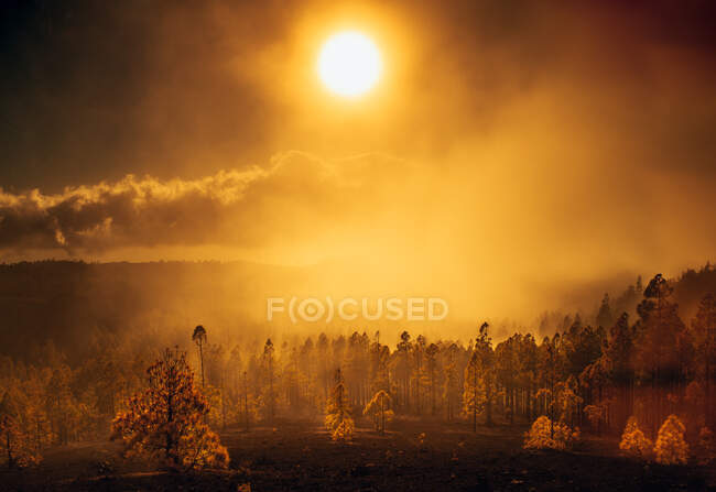Veduta di alberi ardenti in fumo e fiamma sotto sole lucente su cielo in foschia — Foto stock