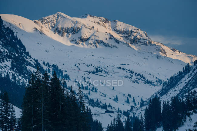 Wonderful view of coniferous forest with amazing mountains on the background in Austria — Stock Photo