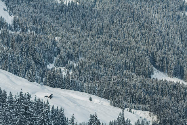 Wonderful view of coniferous forest on an amazing mountain in Austria — Stock Photo