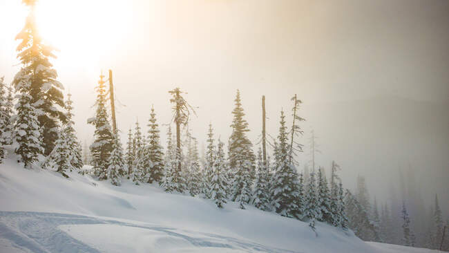 Wonderful view of coniferous forest between snowdrift in winter in Canada — Stock Photo