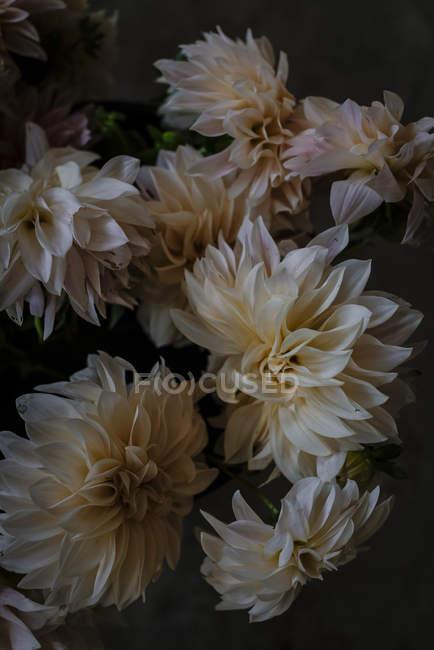 Bündel frischer weißer Chrysanthemen auf verschwommenem Hintergrund — Stockfoto