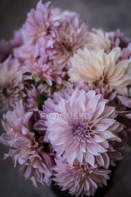 Bouquet de chrysanthèmes blancs frais sur fond flou — Photo de stock
