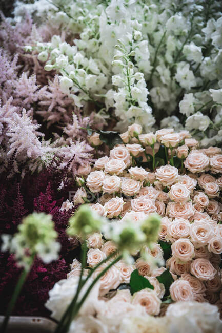 Closeup bunch of beautiful fresh chrysanthemums — Stock Photo