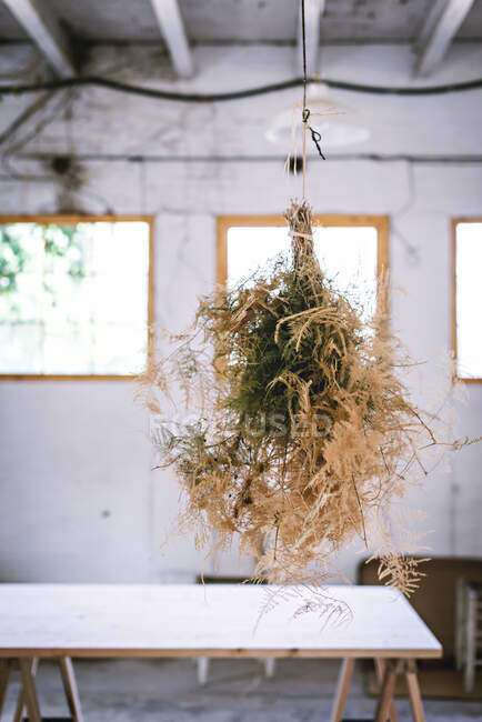Concept of bunch of coniferous twigs drying and hanging on twist in grey room with table — Stock Photo