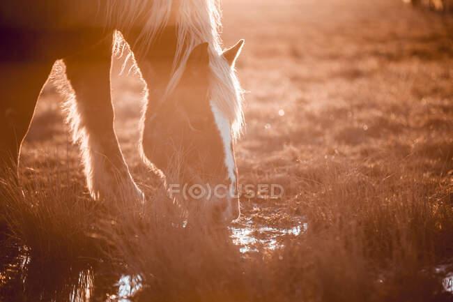 Vista laterale di bellissimi cavalli che pascolano sul prato vicino alla pozza d'acqua tra le colline nella giornata di sole a Cerdanya, Francia — Foto stock