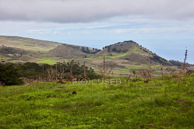 Paisaje de laderas montañosas con campos verdes de plantaciones bajo cielo nublado, Islas Canarias - foto de stock