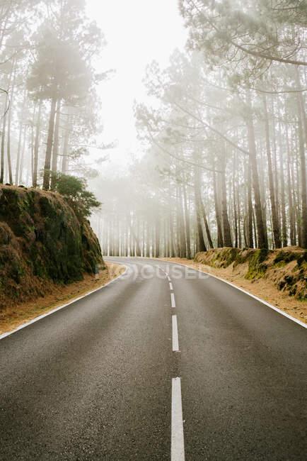 Дорога в туманному лісі. — стокове фото