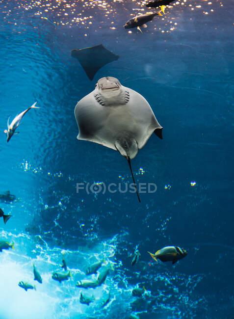 Pesci vari in grandi acquari — Foto stock