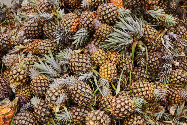 From above of big pile of just harvested and ripen pineapples — Stock Photo