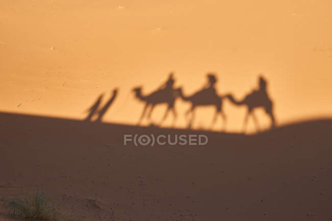 From above shade on sand land of camels and people going in desert in Marrakesh, Morocco — Stock Photo