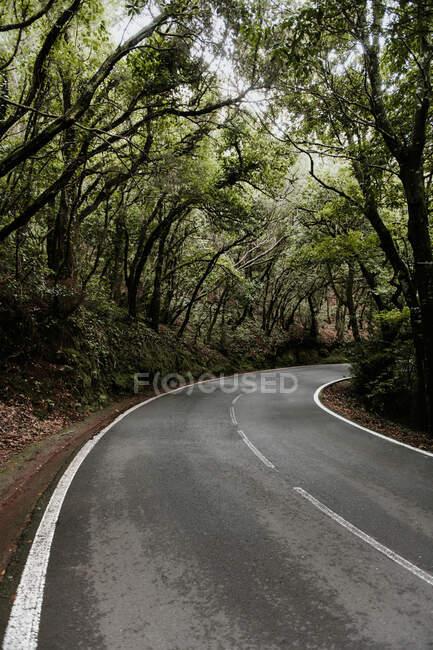 Вузький асфальтний маршрут, що веде між алеєю зелених лісів. — стокове фото