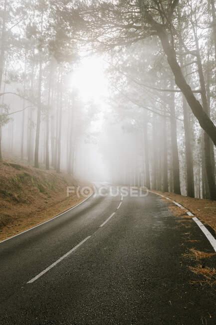 Strada asfaltata nella foresta nebbiosa — Foto stock