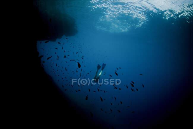 Из-под ног ныряльщика, плавающего в косяке рыбы в глубоком океане — стоковое фото