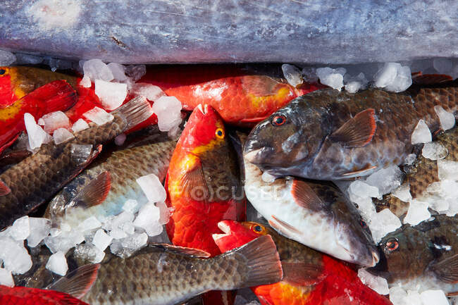 From above cooling ice with fresh catch of small fish — стокове фото