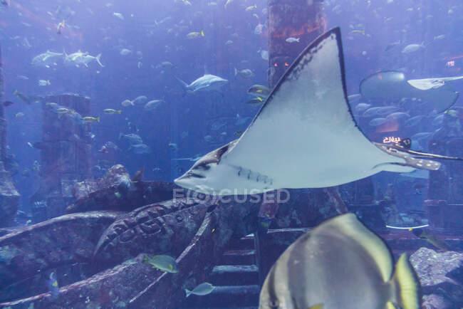 Various fish in large aquarium — Stockfoto