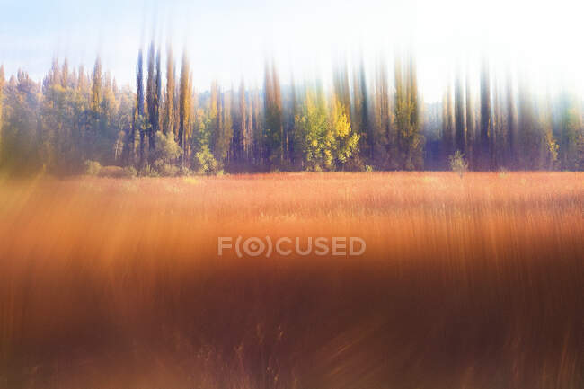 Abstract view to orange field and blurred trees as Pictorialism concept — Stock Photo
