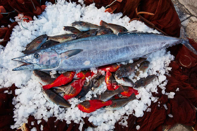 From above of silver shiny fish on cooling ice with fresh catch of small fish — Photo de stock